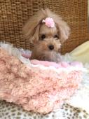 Angel Flower pink ** エンジェル フラワー ピンク **
