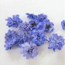 立体乾燥花 八重コデマリ  紫色