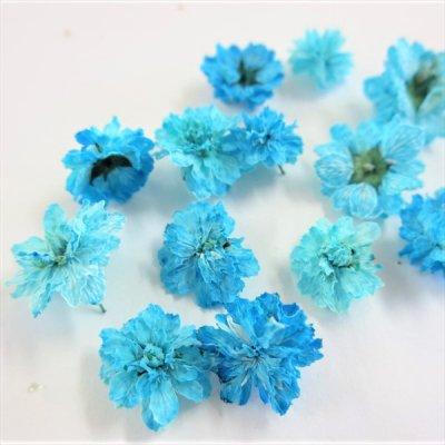 立体乾燥花 八重コデマリ  青色