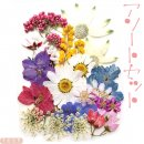 押し花 アソートセット 花の種類11種