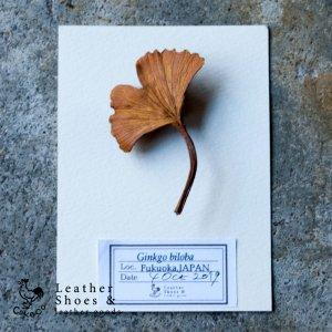 葉っぱのブローチ イチョウ