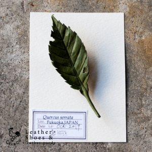 葉っぱのブローチ コナラ