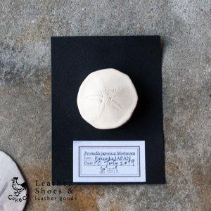 ヨツアナカシパン ブローチ【受注製作品】【即納品】