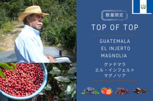 数量限定販売 GUATEMALA  EL INJERTO MAGNOLIA  -グァテマラ エル・インフェルトマグノリア- 300g