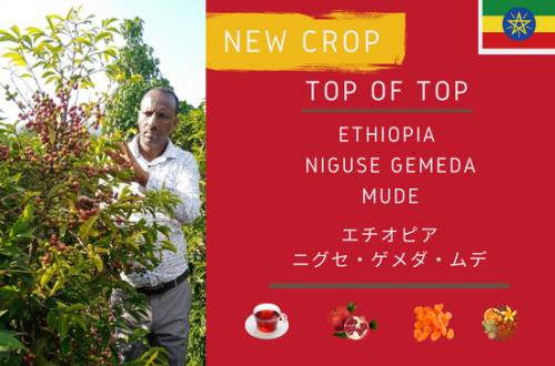 ETHIOPIA  NIGUSE GEMEDA MUDE -エチオピア ニグセ・ゲメダ・ムデ- 300g