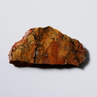 【2014TUCSON】Strelley Pool Oldest Stromatolite ストロマトライト/オーストラリア産
