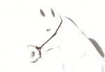 【Equipe】鼻革(ドロップタイプ・ロープ)BR43