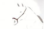 【Equipe】鼻革 BR55