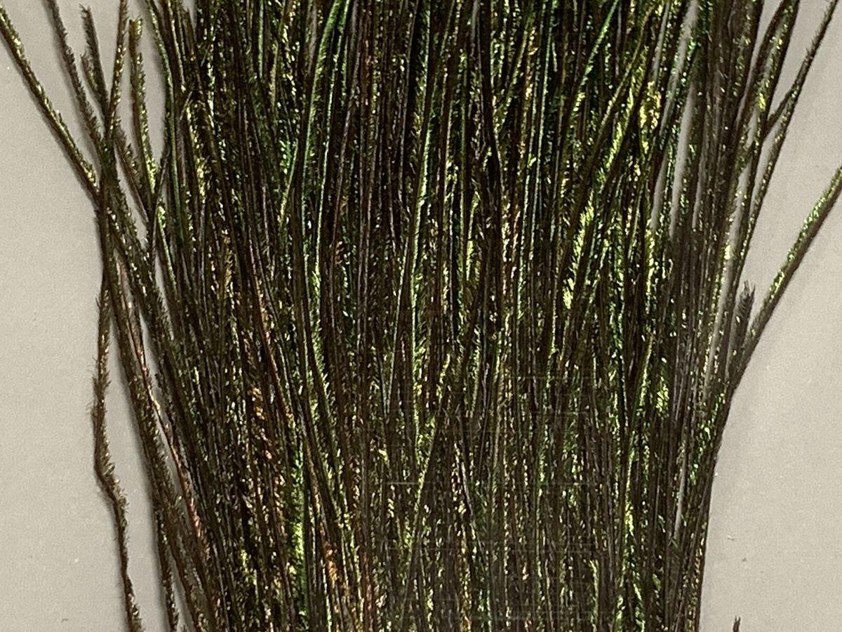 タイイング(毛鉤製作) マテリアル-アキスコ ピーコックハール ナチュラル