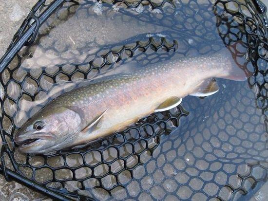 完成フライ・毛鉤 テンカラ毛鉤-n-VISION 川でも管釣りでも強力!『逆さ毛ばり #12 4本セット』
