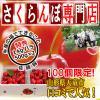【予約】佐藤錦 1kg バラ (500g パック × 2入) 特秀L【サクランボ 専門店】