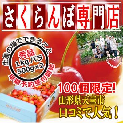 【予約】【秀品】佐藤錦 1kg バラ (500g パック × 2入) L【クール冷蔵便対応】【サクランボ 専門店】