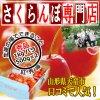 【予約】【秀品】紅秀峰 1kg バラ (500g パック × 2入) 2L【サクランボ 通販店】