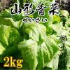 【晩秋限定】山形青菜2kg【漬物】【山形の郷土料理】【せいさい】