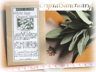 ホワイトセージ 種 (ホワイトセージ・オーガニック・シード) 0.1ml入り(自分で育てる☆組合せ販売)