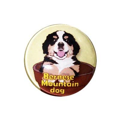 20mmガラスピンバッジ・犬/バーニーズマウンテンドッグ(YE)