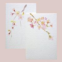 季節のはがき 春  桜/しだれ桜