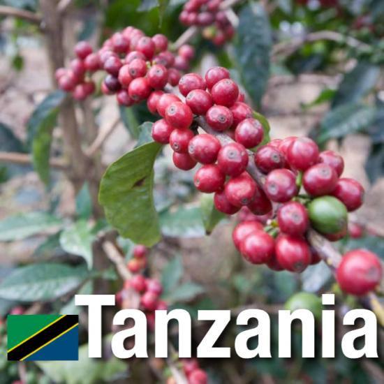 タンザニア/AA モンデュール