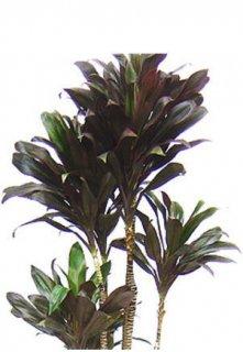 おまかせ 観葉植物