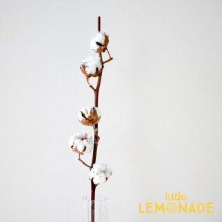 【コットンフラワー】 枝付 綿の木 ドライフラワー 綿花 ワタの木 飾り テーブル装花 ディスプレイ デコレーション onoen リトルレモネード (50040-000)