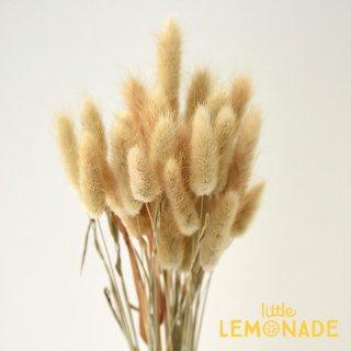 【ラグラス ナチュラル】ドライフラワー ボタニカル 花 飾り テーブル装花 ディスプレイ デコレーション onoen リトルレモネード (42050-000)