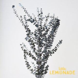 【ユーカリ・ベビーブルー グリーン】 緑 ドライフラワー ボタニカル 花 飾り テーブル装花 ディスプレイ デコレーション onoen リトルレモネード (02440-700)