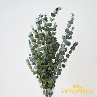 【グニーユーカリ】 緑 ドライフラワー ボタニカル 花 飾り テーブル装花 ディスプレイ デコレーション onoen リトルレモネード (02295-700)
