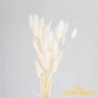 【ラグラス ホワイト】ドライフラワー インテリア ボタニカル 花 飾り テーブル装花 ディスプレイ  onoen (42050-011)