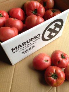 MARUMO規格外トマト5kg