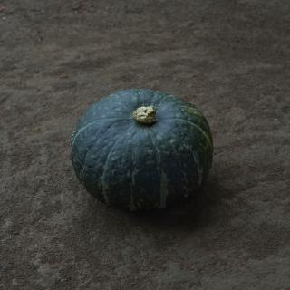 かぼちゃ みやこ