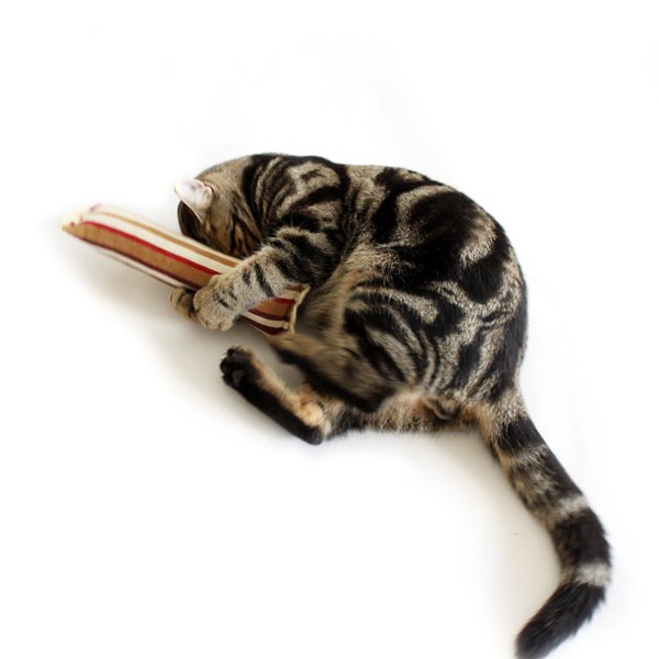 猫のおもちゃ[モッドキッカー]けりぐるみ(ローズ・スクエア)|Hauspanther