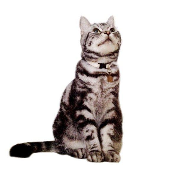 猫の首輪[ヘンプ×オーガニックコットン]グリーン
