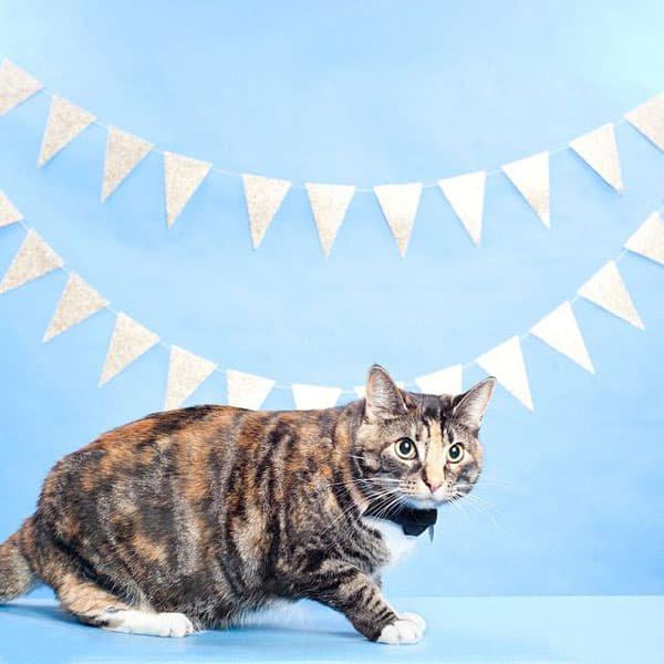 猫の蝶ネクタイ[バック・トゥ・ビジネス]ボウタイ