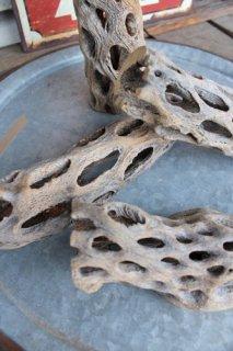 サボテンの骨(カクタススケルトン)