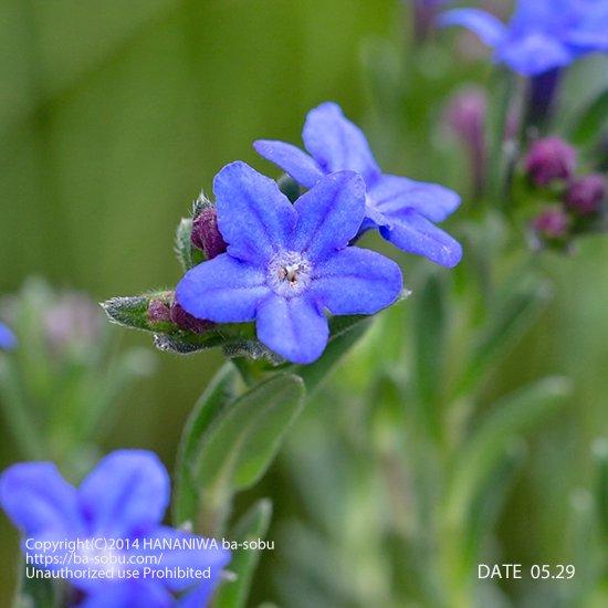 リソドラ ヘブンリー ブルー