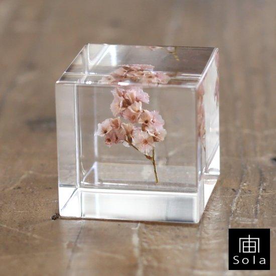 宙-sola- Sola cube サマーチェリー