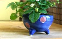 砥部焼◆ ころりん植木鉢■水玉ピンク