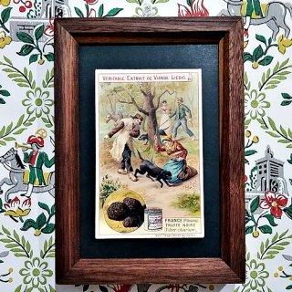キノコの額Liebig Card 「Edible Fungi 1897's」 (J)