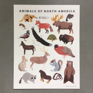 smalladventure Animals of North America
