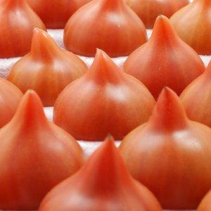 <産地直送>福島県玉川村産 小針さんの「フルーツトマト」食べ比べセット 合計1.5� (玉数目安:12玉)【送料込み】
