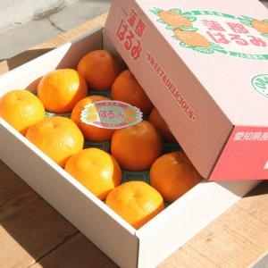 愛知県 蒲郡産「はるみ」1箱12玉入り【送料込み】