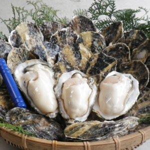 産地直送(お値打ち!長崎県雲仙産「生牡蠣」3kg・5kg 殻付き)※送料込み