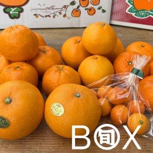 旬八ボックス(旬の柑橘食べ比べセット 2kg〜2.5kg)※送料込 〈大崎広小路店発送〉