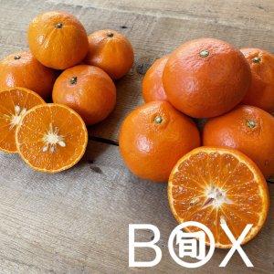 旬八ボックス(珍しい柑橘2種食べ比べ「熊本県産 みはや& 和歌山県JA紀の里 べにばえ」各6玉)※送料込 〈大崎広小路店発送〉
