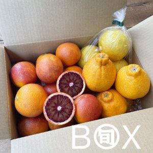 旬八ボックス(国産ブラッドオレンジと旬の柑橘セット 1箱 約2kg)※送料込 〈大崎広小路店発送〉