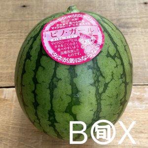 旬八ボックス(お値打ち!茨城県他 新種の小玉スイカ「ピノガール」1玉〜2玉 ※1玉あたり約1.5〜1.7kg )※送料込み