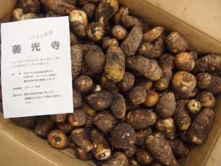 旬八ボックス(ねっとり美味しい幻の里芋「善光寺」2.5kg / 5.0kg)※送料込