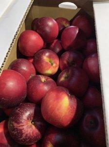 旬八ボックス(さわやか酸味にパリッと果肉!あかねりんご 北海道余市町産 5kg, 10kg)※送料込