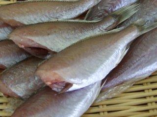 いしもち イチモチ シログチ 新潟の魚 一夜干し