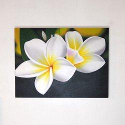 プルメリア(フランジパニ) WHITE  60×80(cm)